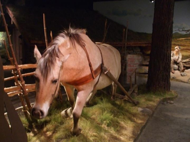 Workhorse exhibit in the Lillehammer Museum