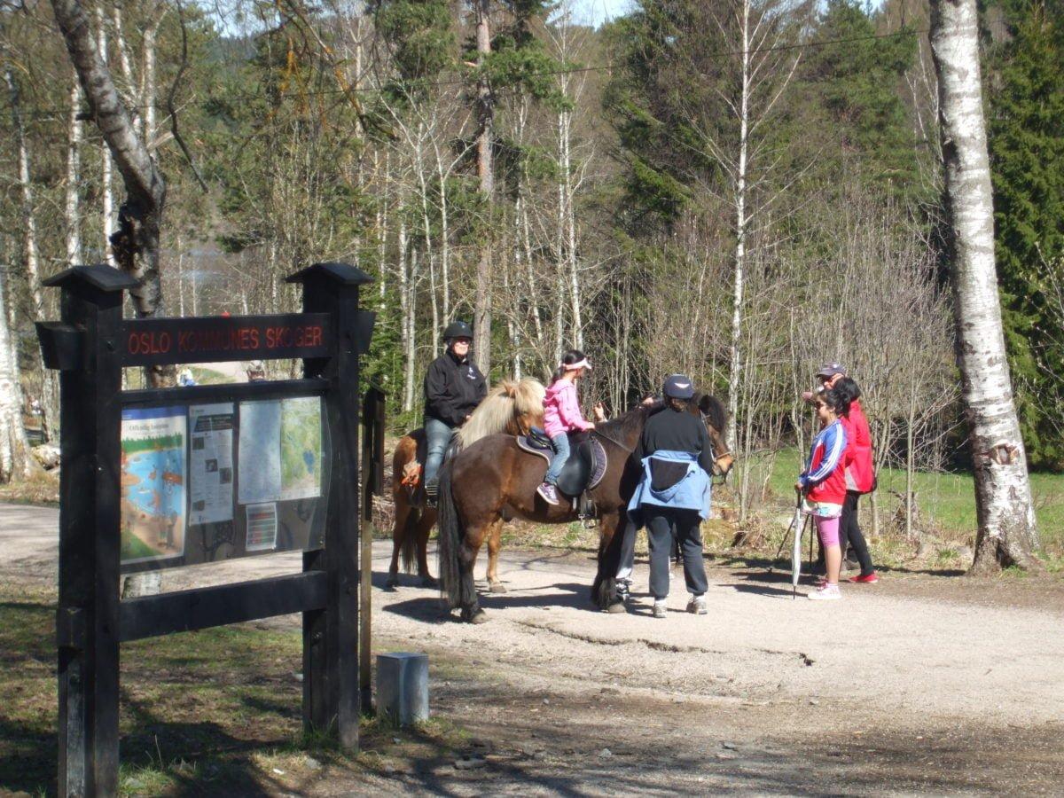 Ponies at Sognsvann