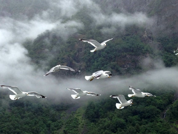 Seagulls following the boat