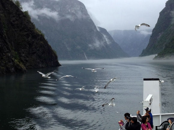 Seagulls on the Naeroyfjord