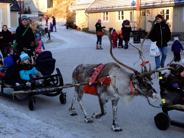 Reindeer pulling a sled