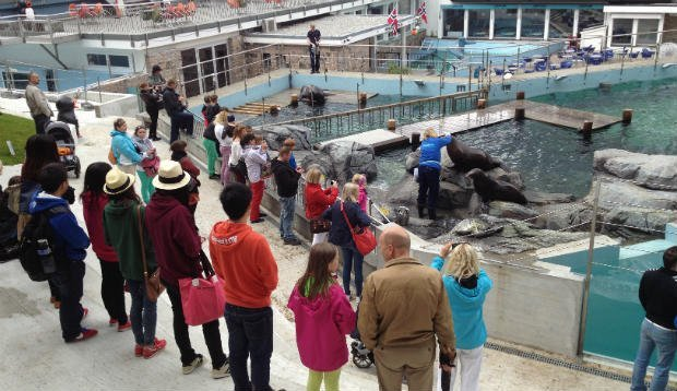 Feeding time with the sea-lions