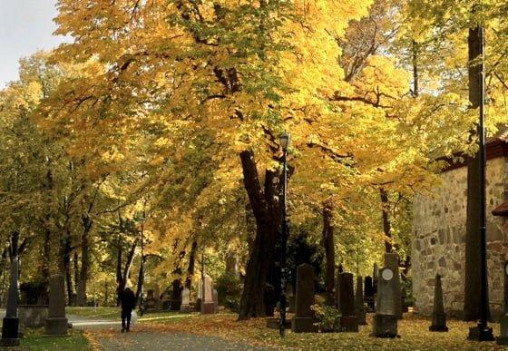 Autumn colours in Trondheim