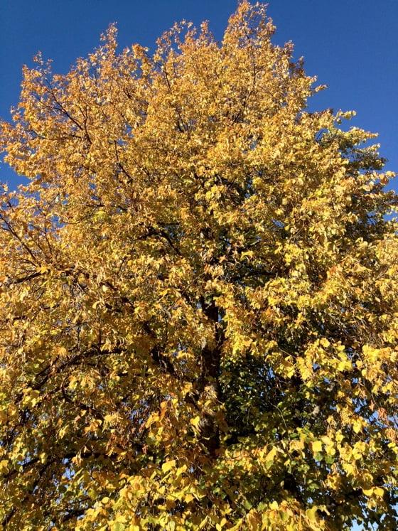 Autumn in Trondheim