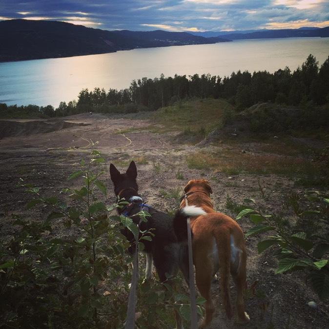 Dogs and the Norwegian landscape