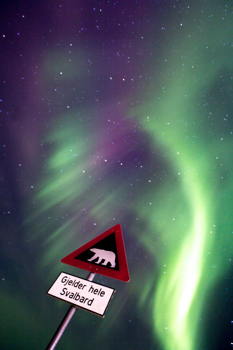 Polar bear sign under the northern lights in Svalbard