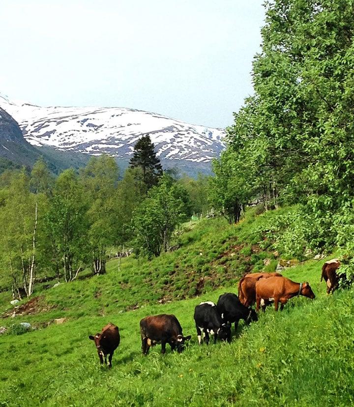 A farm near Hellesylt, Norway