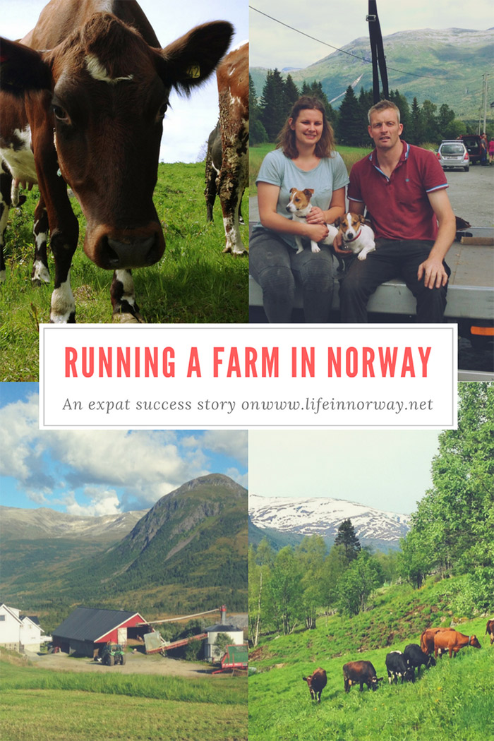 Some British farmers explain how to run a farm in the Norwegian fjords