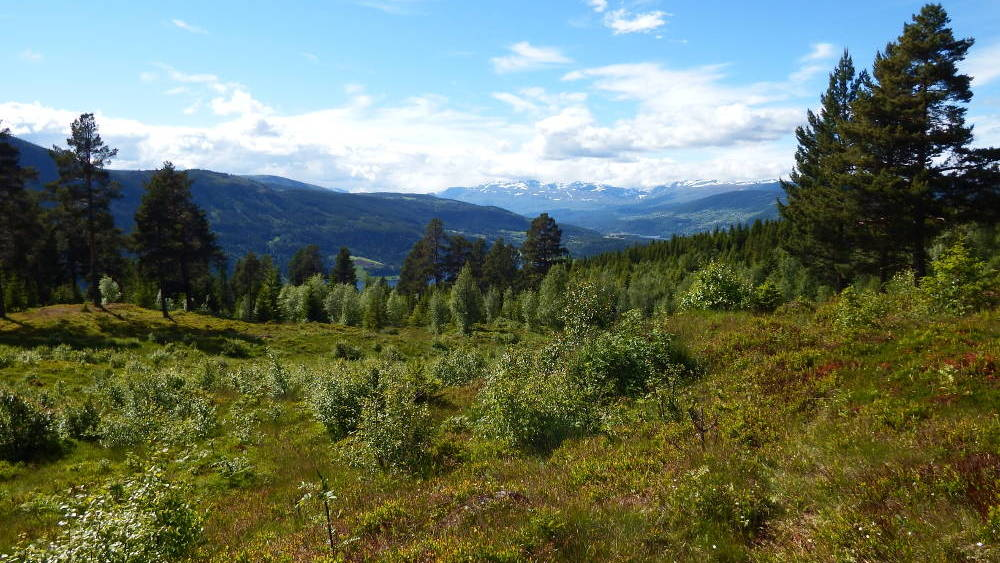 The view from Gardbergfeltet of the Valdres valley.