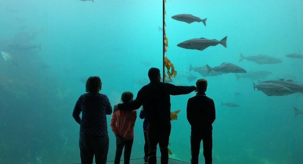 Ålesund aquarium