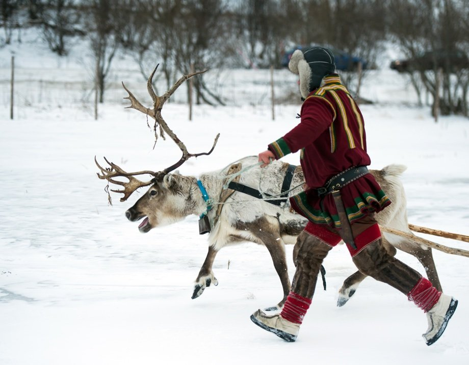 A Sami reindeer herder