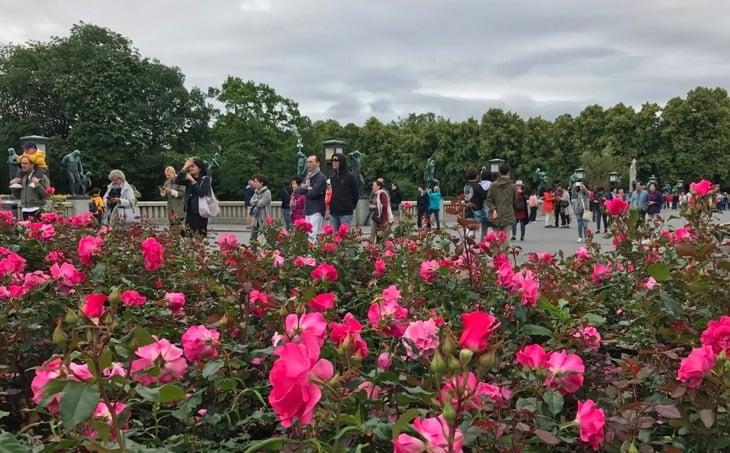 Flowers in Frogner Park, Oslo