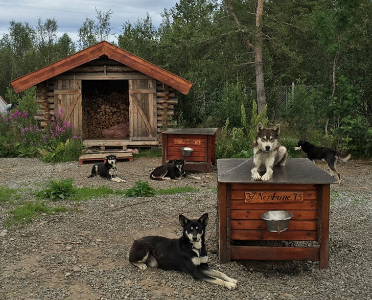 Holmen Husky Lodge in Alta, Norway