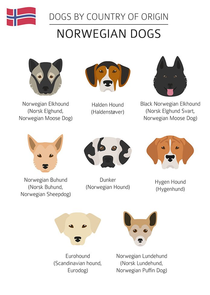 Norwegian dogs explained