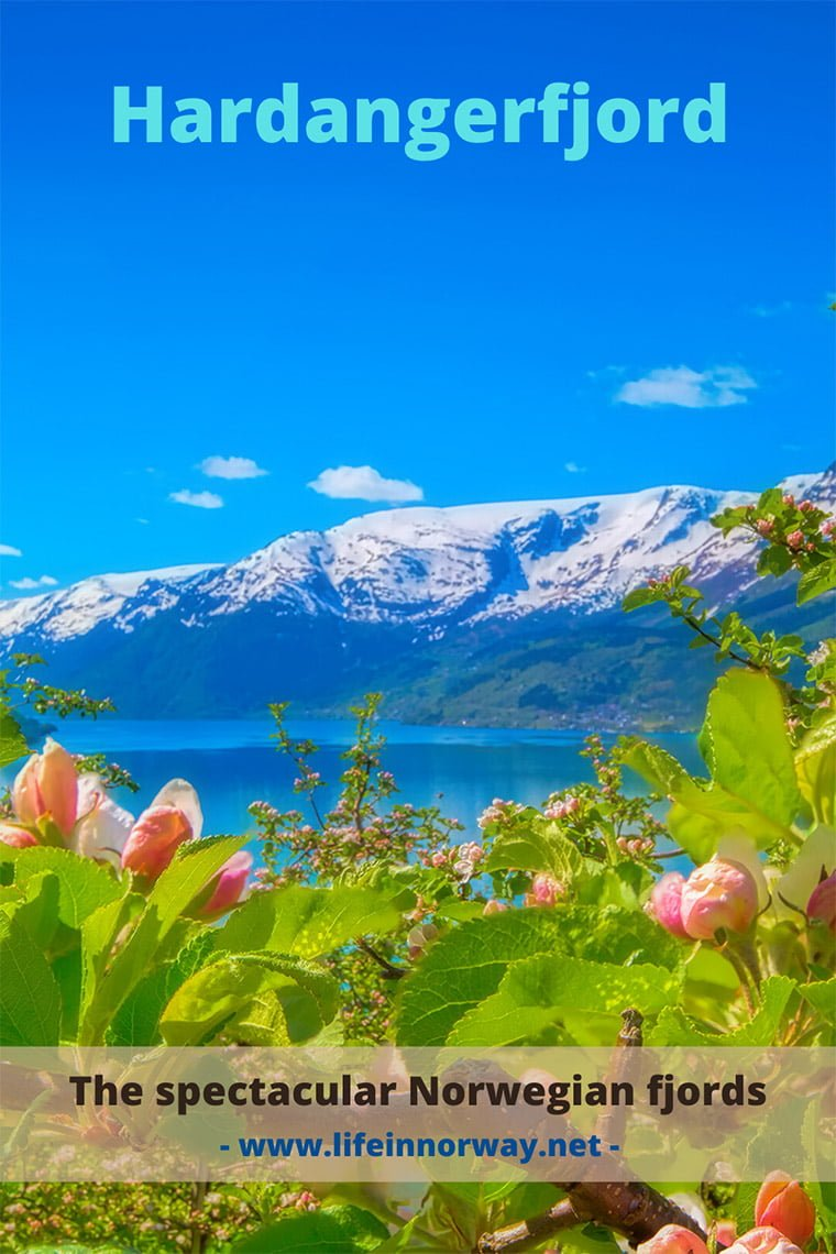 Hardangerfjord in Norway with beautiful flowers and snow-capped mountains