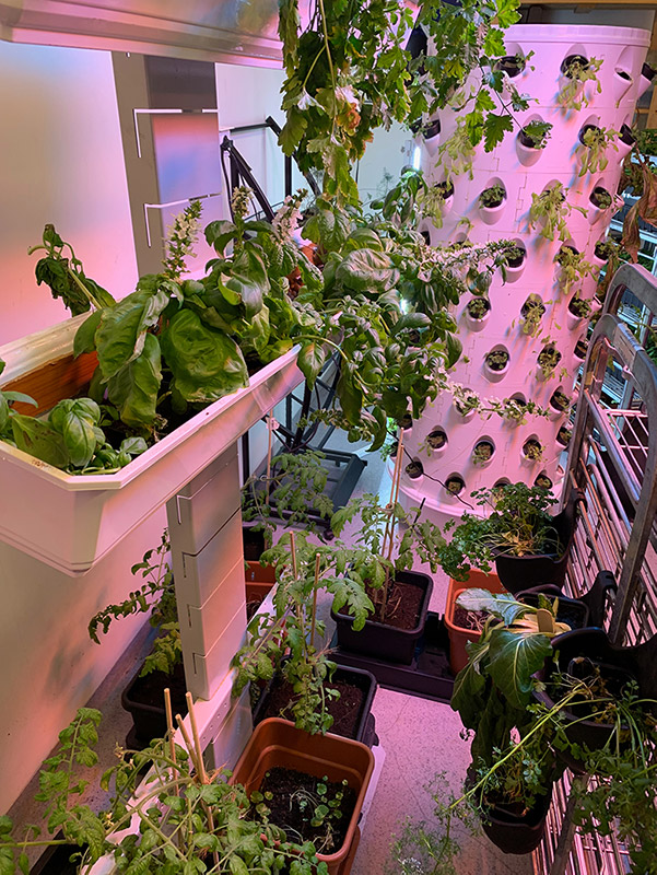 Inside the hydroponics lab of Polar Permaculture in Svalbard