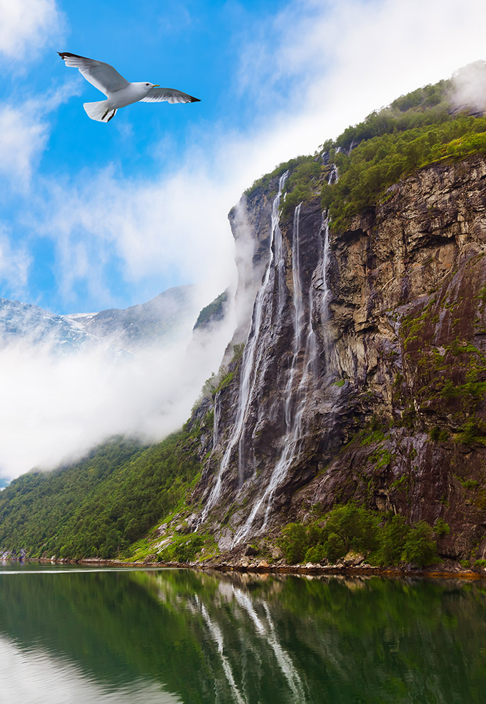 Bird flying in a Norwegian fjord