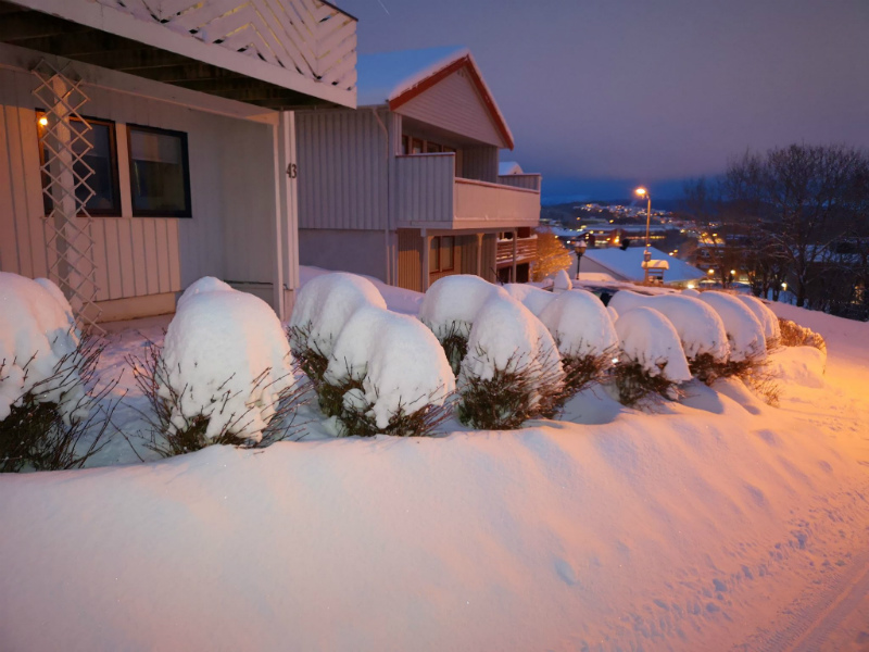 snowy scene Bodo