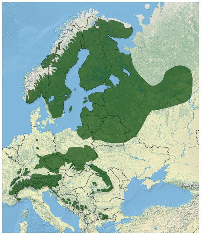 Norway spruce distribution range across Europe