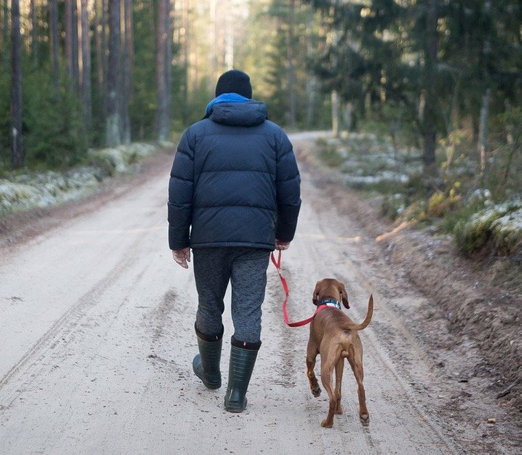 A Norwegian dog walker