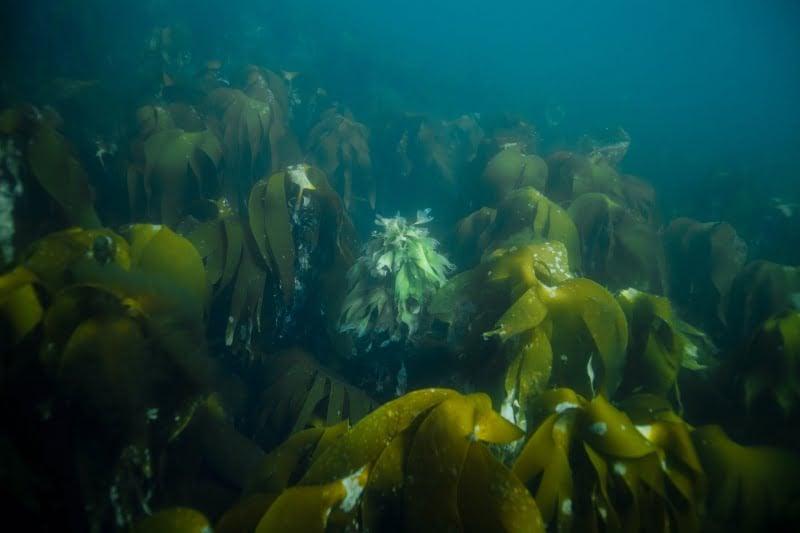 Norway underwater