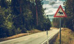 Moose road sign in Norway