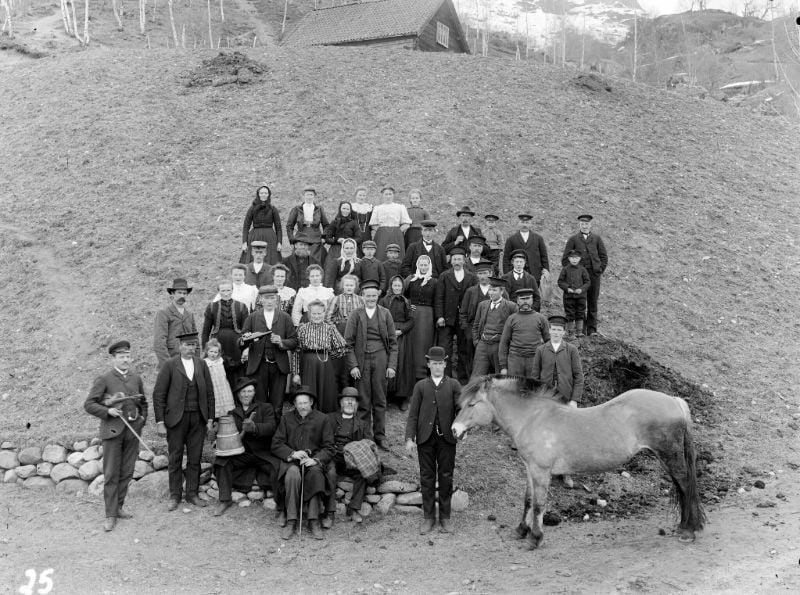 Norwegian wedding photo with horse