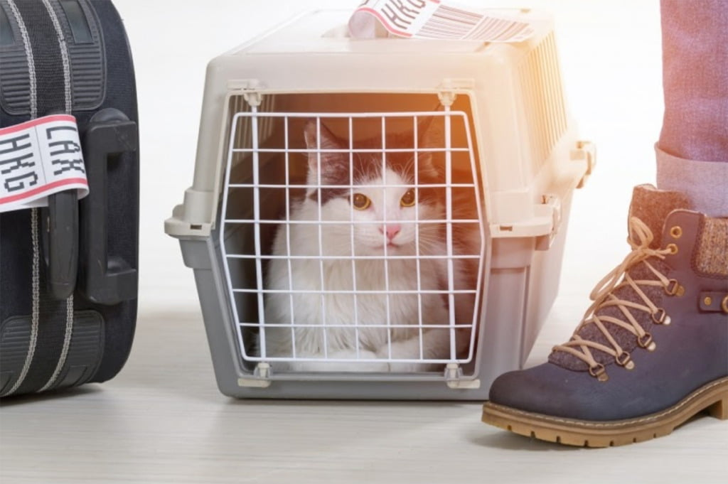 Cat in a cage for relocation to Norway