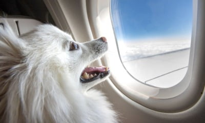 Dog on a plane moving to Norway