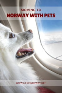 Moving to Norway with pets for pinterest