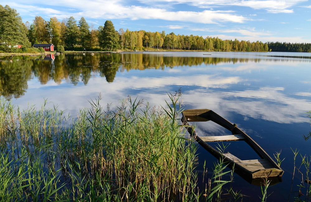 Swedish forest and lake