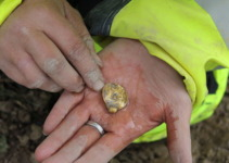 Norse Gold: 1,500-Year-Old Pendants Found In Norway