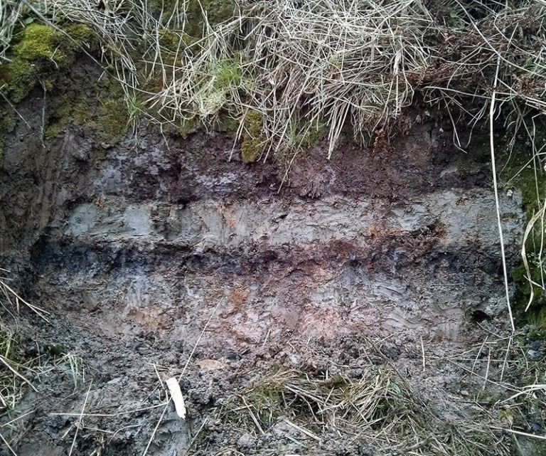 Storegga tsunami deposits (grey upper layer), bracketed by peat (dark brown layers), taken at Maryton on the Montrose Basin, Scotland