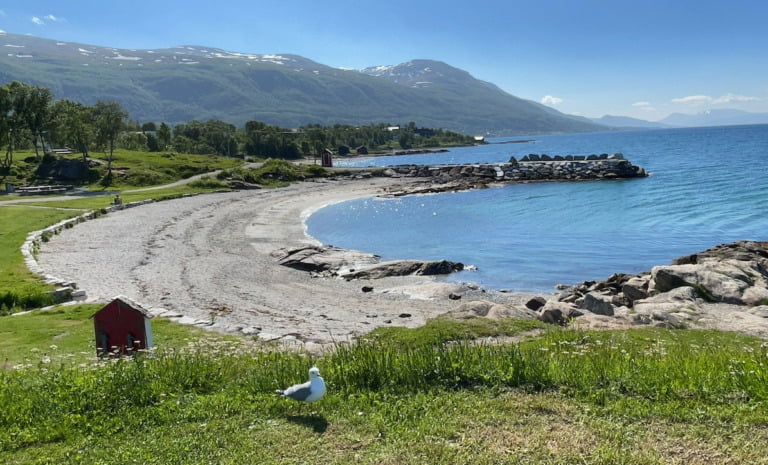 Grassy bank at Tromsø beach.