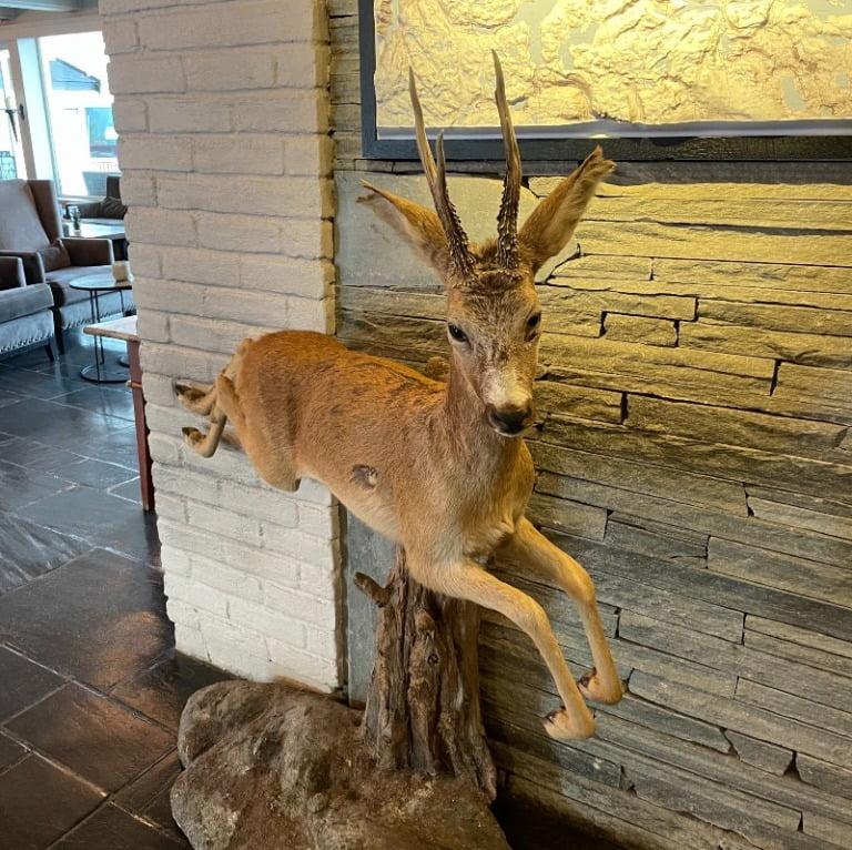 Deer in the hotel lobby
